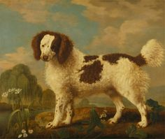 George Stubbs, 1724-1806, British, Brown and White Norfolk or Water Spaniel, 1778, Oil on panel, Yale Center for British Art, Paul Mellon Collection