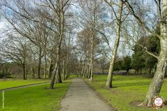Phoenix Park Dublin, Phoenix, Sidewalk, Park, Travel, Ireland, Destinations, Europe, Lugares