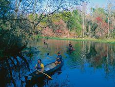 ...and kayak the Hillsborough River in Florida!