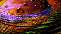 Wallpaper Desktop Background Bird (32)