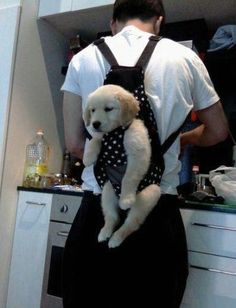 Keeps puppy out of trouble when you're busy...this is so cute!