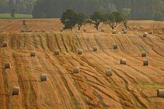 Stubble field by Adam Konieczny on 500px
