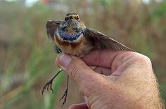 Yoav Perlman's birding in Israel blog: October 2009