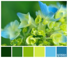 Flower Fresh #patternpod #patternpodcolor #color