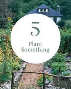 #5 on our summer bucket list: Plant Something
