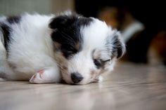 we love little puppies
