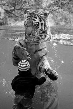 I love tigers.