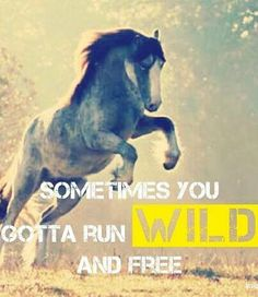 """Sometimes you gotta run wild and free"" #Horses"