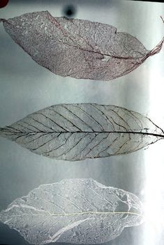 Skeleton leaves - Decorate your home with leaves! Get more decor and design… Leaf Skeleton, Wabi Sabi, Autumn Leaves, Fallen Leaves, Graphic, Fun Crafts, Plant Leaves, Delicate, Cool Stuff