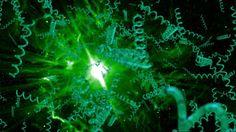 Pestki z malin: Morska alga