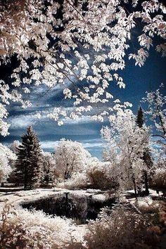 A winter wonderland; isn't quite as appealing as the scenery! Winter Szenen, I Love Winter, Winter Magic, Winter White, Winter Park, Beautiful World, Beautiful Places, Simply Beautiful, All Nature