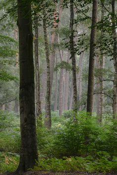 Hoge Veluwe National Park, Gelderland, Netherlands by coopertje