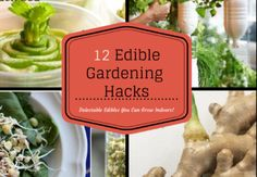12 Edible Gardening Hacks Creative Gardeners Share How They Grow Food Indoors In Unique Ways Custom