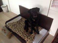 Bailey i sin kasse
