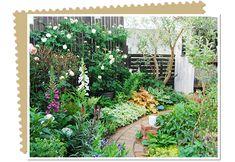 植物に癒される 緑豊かな手作りの庭 #97 紗絵さん