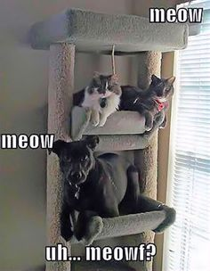 Dog Hanging With The Cats cute animals dogs cat cats adorable dog puppy animal pets funny animals funny pets funny dogs