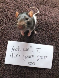 Funny Rat With a Message