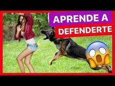 - YouTube Youtube, Sports, Exercises, Dogs, Gatos, Hs Sports, Sport, Youtubers, Youtube Movies