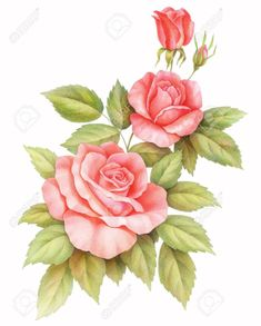 Pink red vintage roses flowers isolated on white background. Colored pencil watercolor illustration.