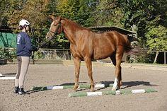 Die Geführte Gelassenheitsprüfung fordert von den Pferden das Passieren von zehn Hindernissen mit steigendem Schwierigkeitsgrad. Meist sorgt die Wasserplane oder der Flattervorhang für Irritationen. Aber mit etwas Geduld im Training fassen die Pferde Vertrauen und bleiben ruhig auch in diesen ungewohnten Situationen ruhig.