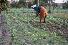 Small Farmers in West Africa Need Support – Despite Good Rains by IPS News Agency Food Insecurity, News Agency, West Africa, Farmers, Scale, People, Weighing Scale, Farmer, People Illustration