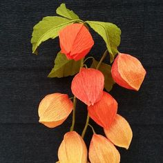 """Hozuki. The real ones have pods that are lighter as you move up the stem. They always make me a little sad and nostalgic for summers in Japan. The """"lanterns"""" help guide spirits home during Obon."""