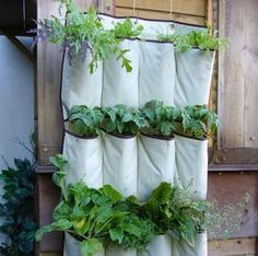 """Shoe Organizer = Vertical Garden Hang a canvas shoe organizer, fill with potting soil, and plant your favorite herbs in the pouches.  Materials  - Hanging shoe organizer  - Pole and attachments (curtain pole/pipe fittings, screws).  - Strong metal hanging hooks  - Compost of a good quality moisture holding type.  - Selection of plants or seeds  - Piece 2"""" x 2"""" of wood, length = width of the organizer to keep the base of pockets away from the wall - Trough planter to catch drips"""