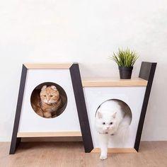 Olha que ideia super bacana pra casinha dos gatos 😻. Fonte: @myzoostudio . #diyhomebr #gatos #cats #pets Pet Beds, Dog Bed, Cat House Diy, Cat Shelves, Cat Playground, Cat Enclosure, Cat Room, Pet Furniture, Cat Accessories