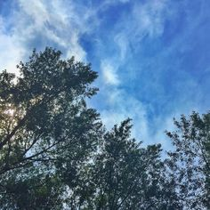 I wondered why my baby son enjoys looking up so much but he is just being positive in life by not looking down and admit it: this does looks beautiful! #lookup #alwayslookingup #alwayslookup #hope #dreams #happiness #luck #blessed #dontlookdown #beautifulnature #treetops #bluesky #instasky