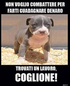 Non voglio combattere | BESTI.it - immagini divertenti, foto, barzellette, video Cute Cats And Dogs, I Love Dogs, Animals And Pets, Funny Animals, Little Bit, Faith In Humanity, My Animal, Shih Tzu, Dog Friends
