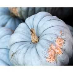 Blue Pumpkin Photo, Pumpkin Photography, Autumn Decor, Fall... ($25) ❤ liked on Polyvore featuring home, home decor, wall art, photographic wall art, photo wall art, blue home decor, blue home accessories and pumpkin home decor