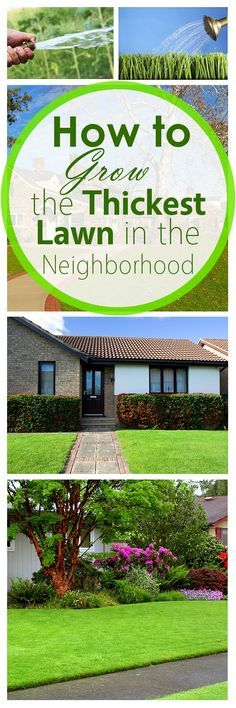 How to Grow the Thickest Lawn in the Neighborhood