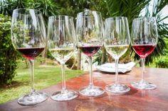 Griechische Weinprobe