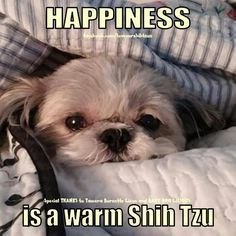 Sadie the Shih Tzu Hope you're doing well.From your friends at phoenix dog in…