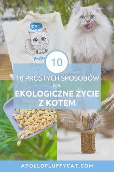 Dzięki 10 prostym sposobom możesz stać się ekologicznym i odpowiedzialnym opiekunem kota. Personal Care, Lifestyle, Self Care, Personal Hygiene