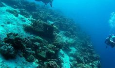 Pro Dive Davao has everything needed for local or visiting divers. Highly experienced and knowledgeable dive guides. Davao, Gap Year, Great Barrier Reef, Scuba Diving, Gopro, Cambodia, New Zealand, Philippines, Thailand