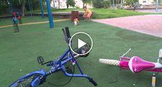 Criança Sofre As Consequências Por Maltratar Gato