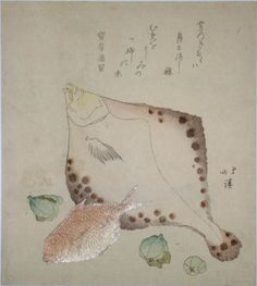 Flounder and Red Bream by Hokkei. Best known for his surimono. Hokkei was originally a fishmonger (hence his name Totoya), and made a number of surimono designed with fish and shells.