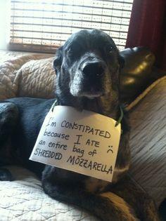 dog shaming, pet shaming, pet shame, pets ...For more funny dogs and hilarious animal memes visit