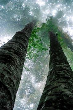 Gaia's Grove