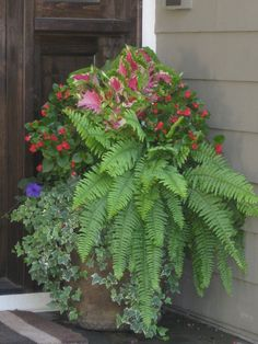 Shade planter, ferns, coleus, begonias