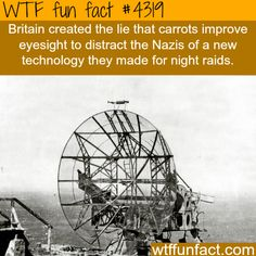 Does eating carrots improve eyesight? -  WTF fun facts