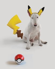 the most difficult pokemon to catch. aka jimmychu. Photo by @rafaelmantesso  . o pokemon mais dificil de pegar. conhecido por jimmychu
