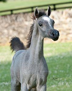Hello World!  young foal at Talaria Farms -