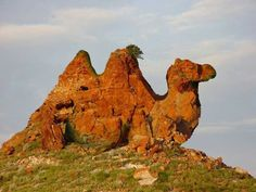 We were traveling over in approx. mid-New Mexico and we began to see the outline of this formation from a long way off. It was called Camel Rock....