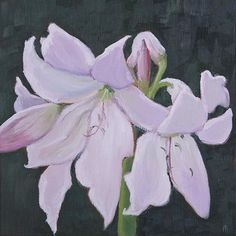 """Maria Levinge """"Crinum Powellii"""" Oil on canvas board, x The inspiration for Maria Levinge's paintings comes from the Irish landscape and its flora and fauna. Irish Landscape, Irish Art, Canvas Board, Oil On Canvas, Flora, Gallery, Dublin, Plants"""