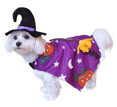 Anit Accessories Pumpkin Witch Dog Costume, 8-Inch - http://www.thepuppy.org/anit-accessories-pumpkin-witch-dog-costume-8-inch/