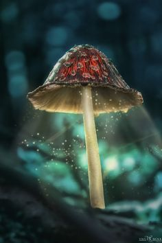Magical Toadstool by Tomas Simoncik with Pin-It-Button on 500px