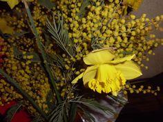 Narcis & Mimose photo by Tatev Sargsyan