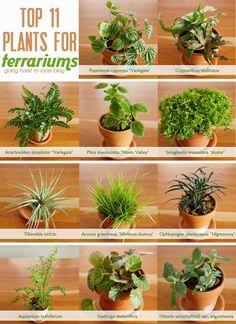 Houseplants - Content to Rent Idea